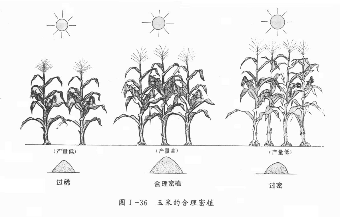 玉米卡通简笔画