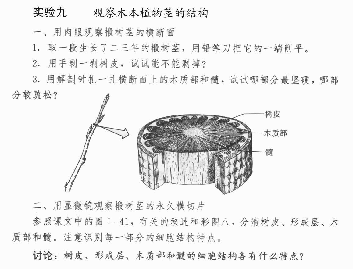 观察木本植物茎的结构